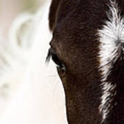 Horse Mare Saskatchewan Field Poster