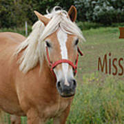 Horse Miss You Poster