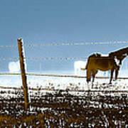 Horse Pasture Revdkblue Poster