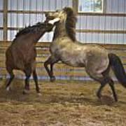 Horse Play Poster by Dean Bennett