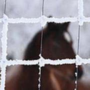 Horse Viewed Through Frost Covered Wire Fence Poster