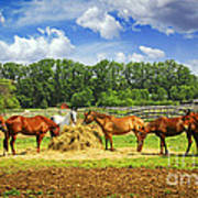 Horses At The Ranch Poster