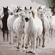 Horses Galloping Poster