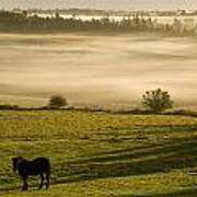 Horses In The Morning Mist, North Poster