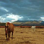 Horses In Winter Landscape  Truchas, New Mexico Poster by Mary Hockenbery