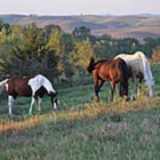 Horses On The Range Poster