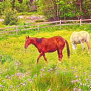 Horses Paradise Poster