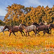 Horses Running Free Poster
