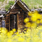House Behind Yellow Flowers Poster