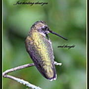 Hummingbird - Thinking Of You Poster