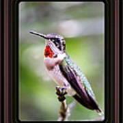 Hummingbird Card Poster