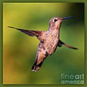 Hummingbird Hello Poster