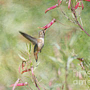 Hummingbird Nourishment Poster