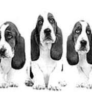 Hush Puppies Poster