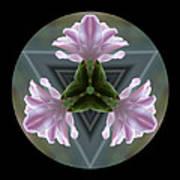 Hyacinth Kaleidoscope Poster