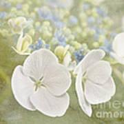 Hydrangea Dreams Poster