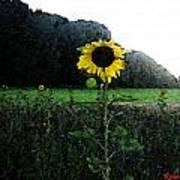 I Love Sun Poster