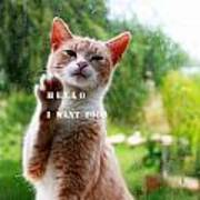 I Want Food Cat Poster