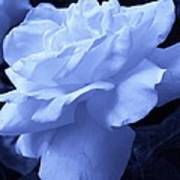 Ice Blue Rose Poster