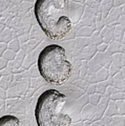 Ice Cap Erosion On Mars, Satellite Image Poster