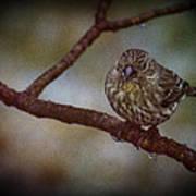 Ice Droplet Bird Poster