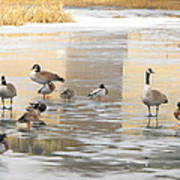 Ice Skating Geese Poster