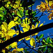 Illuminated Elm Leaves Poster