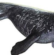 Illustration Of A Prognathodon Poster