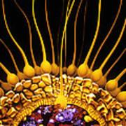 Illustration Showing Mammalian Fertilisat Poster