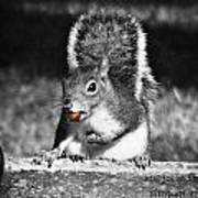 I'm A Nut Black And White Poster