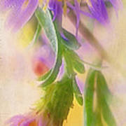 Impression Of Asters Poster