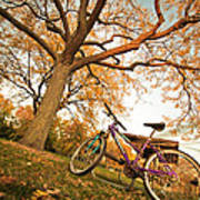 In Search Of Fall Colors Poster