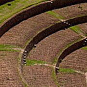 Inca Crop Terraces At Moray Poster