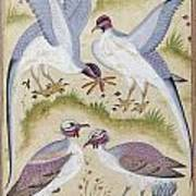 India: Pheasants Poster