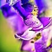 Indigo Flower Poster