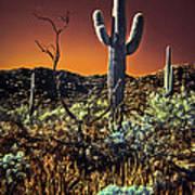 Infrared Saguaro 2 Poster
