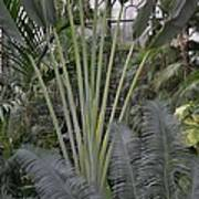 Inside Jungle Poster