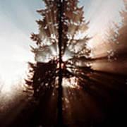 Inspiration Tree Poster