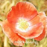 Inspire Beauty Poppy Floral Poster