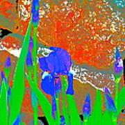 Iris 31 Poster