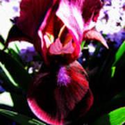 Iris Inner Beauty Poster