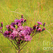 Ironweed In Autumn Poster