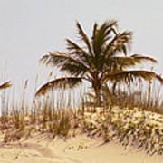 Island Sand Dune Poster