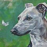 Italian Greyhound With Cabbage White Butterflies Poster
