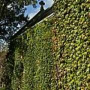 Ivy Covered Chapel Poster