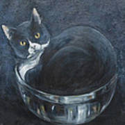 Jack-in-the-bowl Poster