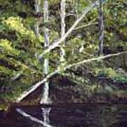 Jackson Bluff On The Waccamaw River Poster