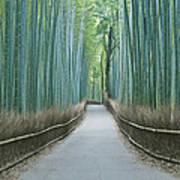 Japan Kyoto Arashiyama Sagano Bamboo Poster by Rob Tilley