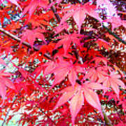 Japanese Maple Leaves 11 In The Fall Poster