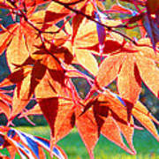 Japanese Maple Leaves 6 In The Fall Poster